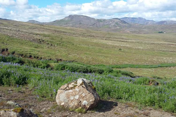 View where volunteers plant trees in Iceland