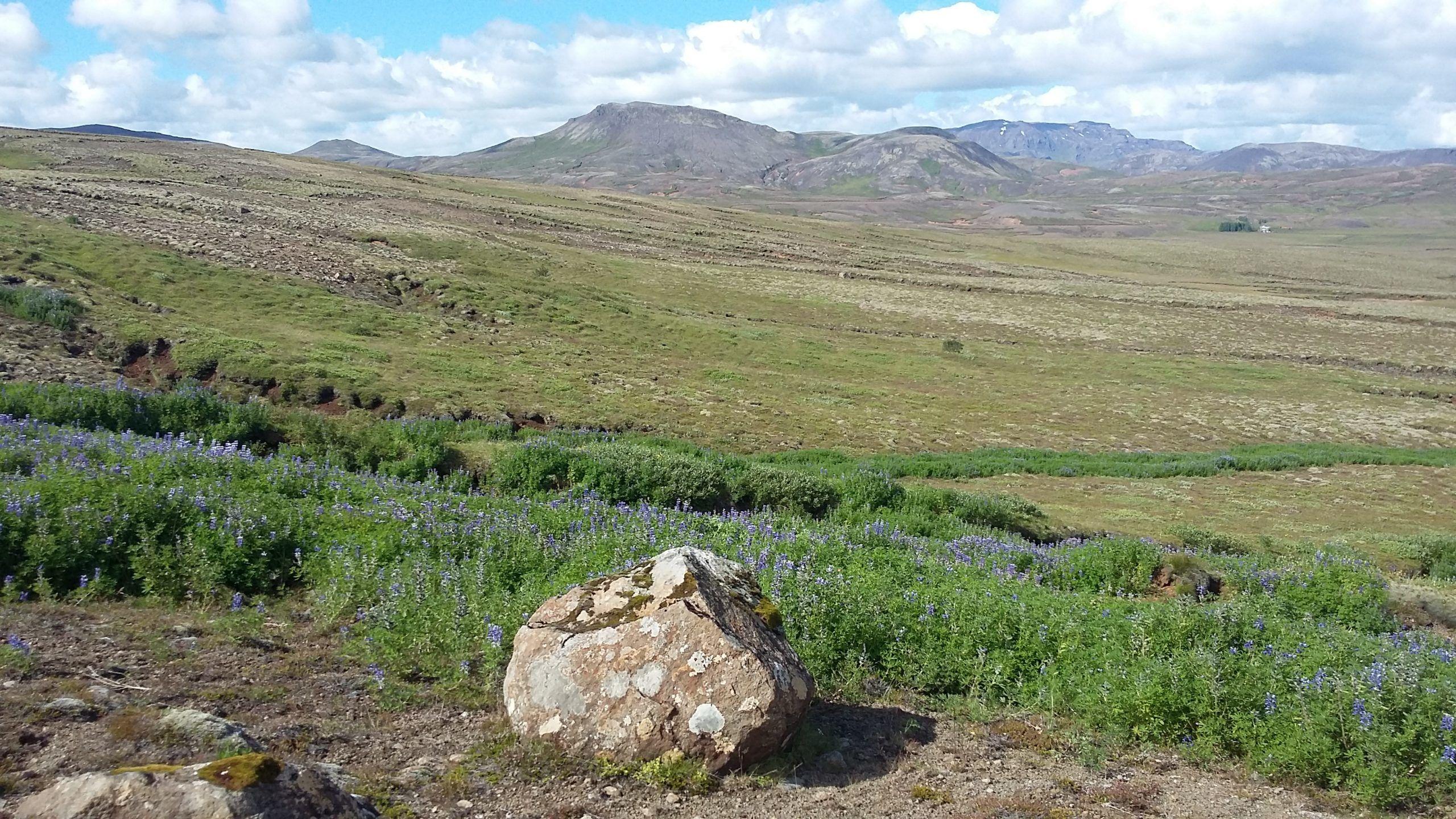 Reforestation Volunteer Project, Iceland