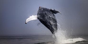 alttagDolphin Whale Volunteer | Volunteer Cape Town | Working Abroad