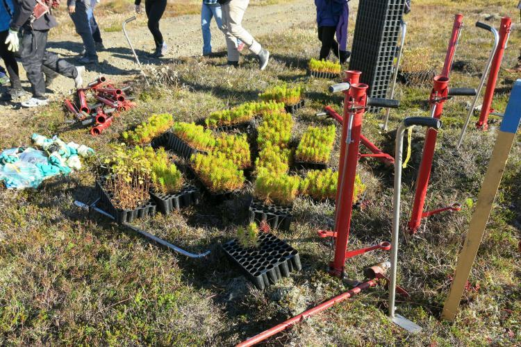 Volunteers will plant trees in Iceland