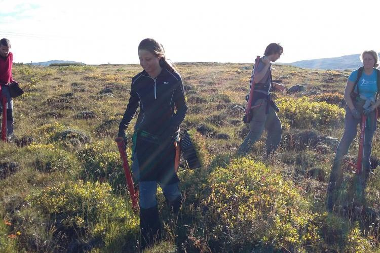 Volunteers tree planting in Iceland