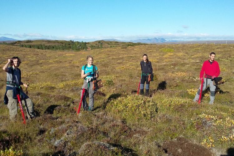 Volunteers doing reforestation work in Iceland