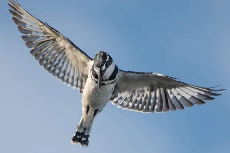 Bird flying in South Africa