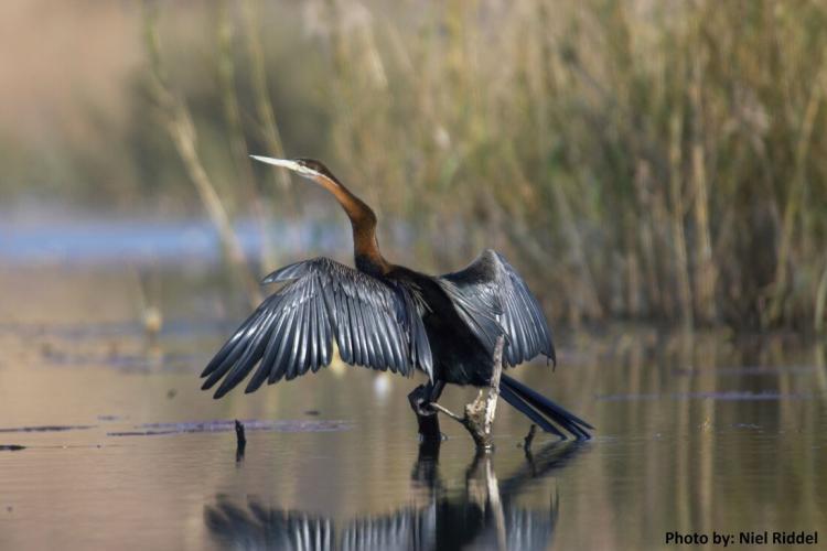 Bird in south Africa