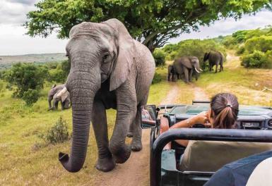 Volunteers watching Elephant in South Africa
