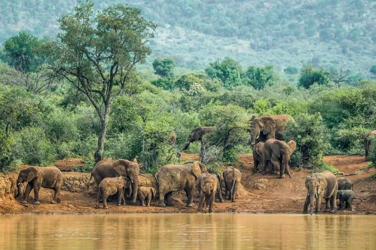 Elephants by the river in South Africa