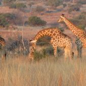 Wildlife Reserve Volunteer Programme, South Africa