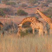 Wildlife Reserve Volunteer Programme, South Africa