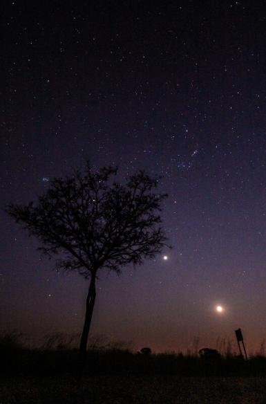 Night sky at wildlife reserve in South Africa