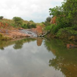 Pond by volunteer camp in South Africa