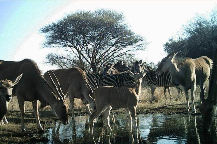 Watering hole in South Africa