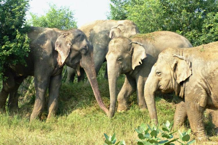 Elephants at sanctuary in India