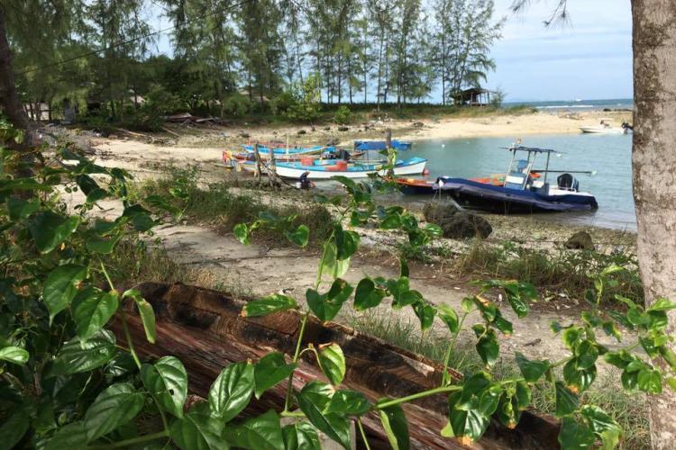 Mangrove beach in Thailand