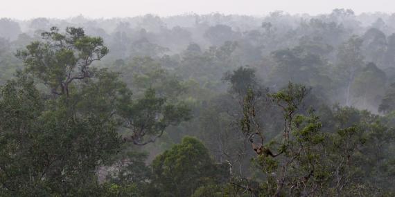Borneo forest Indonesia