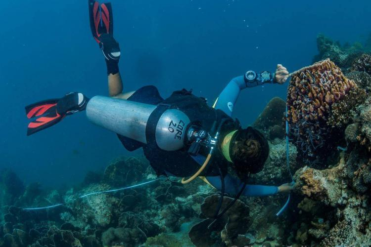 Coral Conservation volunteer diving in Thailand