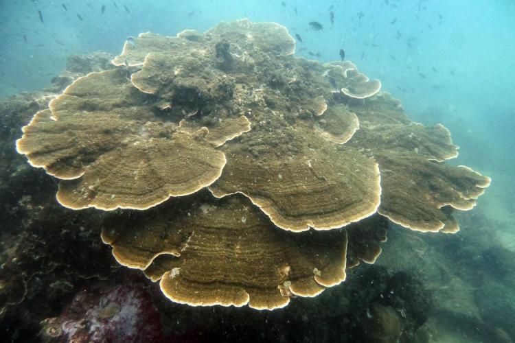 Coral underwater in Thailand