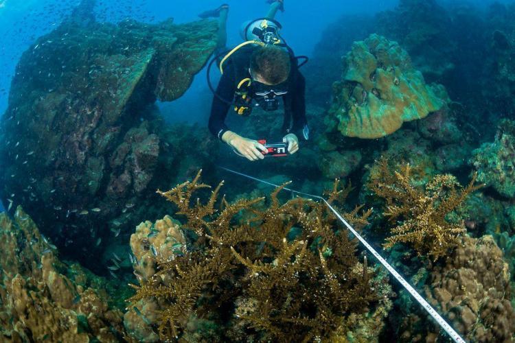 Marine research intern diving in Thailand