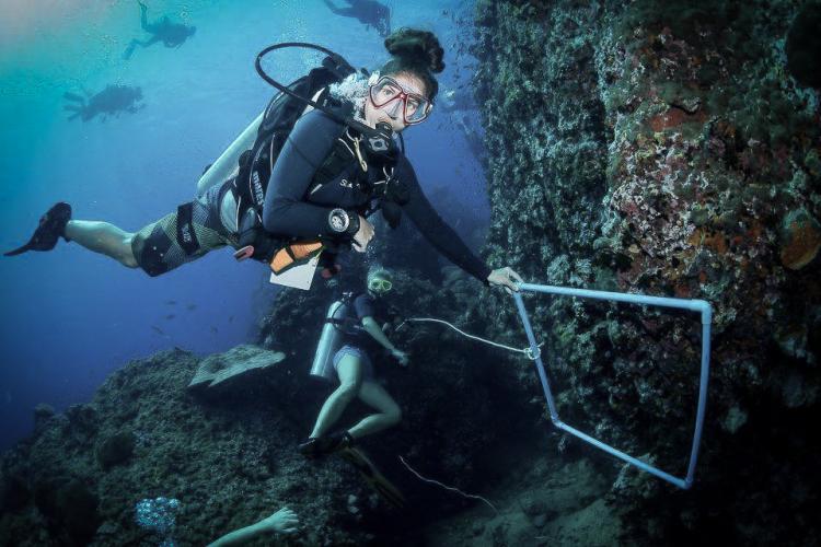 Marine intern diving in Thailand