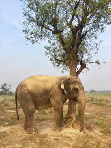 Elephant by tree in India