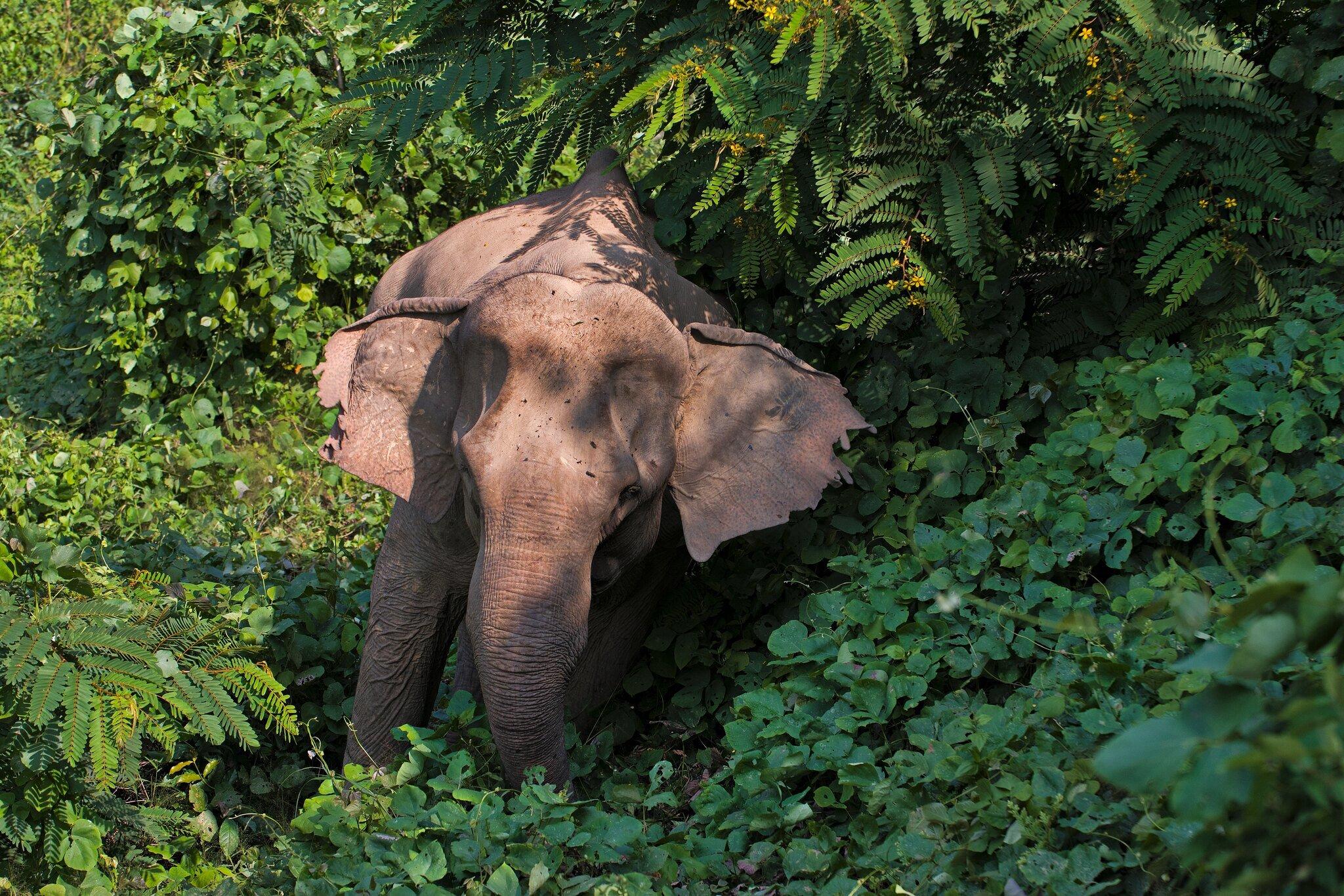 Elephant in jungle in Laos