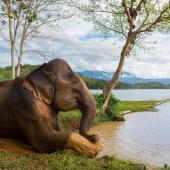Elephant Volunteer Project, Laos
