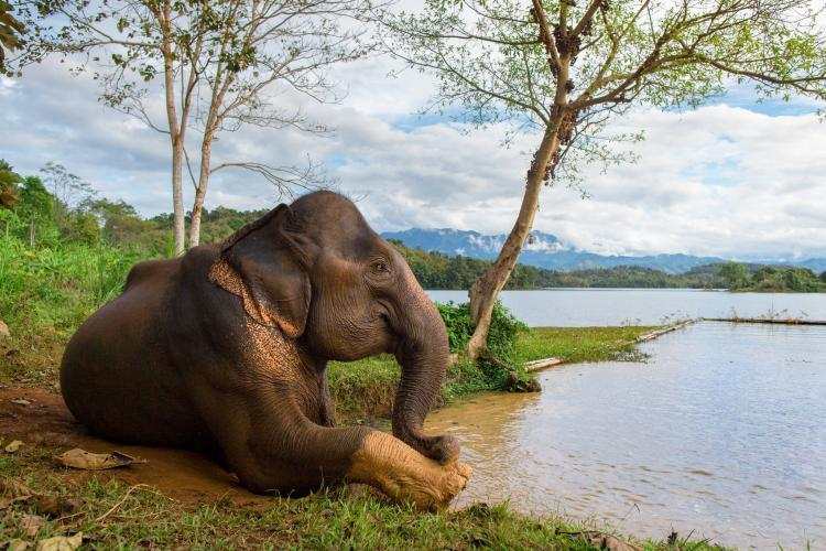 elephant resting by river in Laos