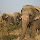 Elephant & Bear Volunteer Project, India
