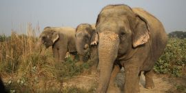 Elephants eating at sanctuary in India