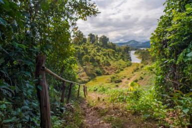 Jungle path in Laos