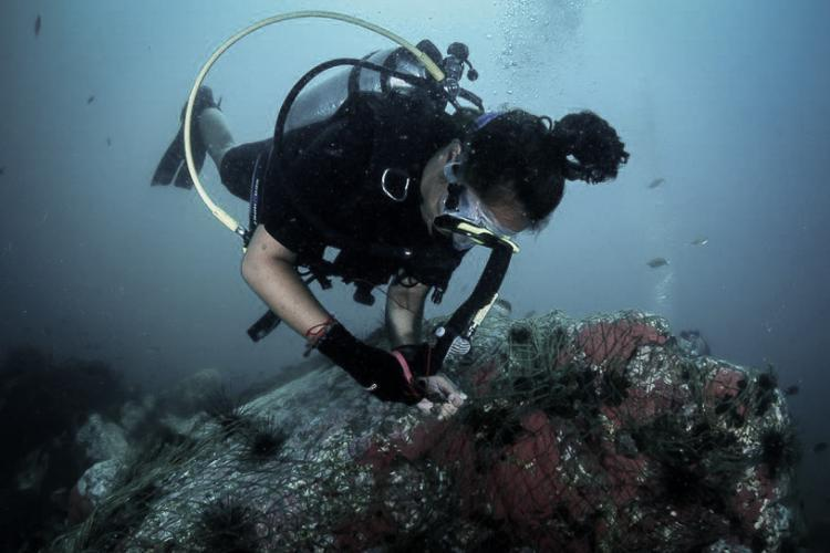 Diving research intern in Thailand