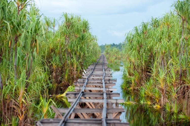 railway in Borneo Sabangau
