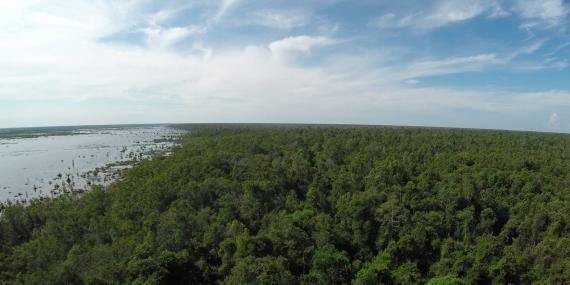 Sabangau forest borneo