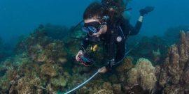 Research intern diving underwater in Thailand