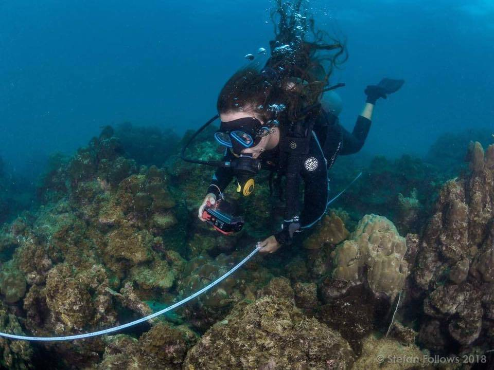Coral Reef Conservation & Diving Project, Thailand