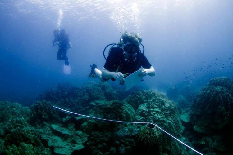 Volunteer diving in Thailand