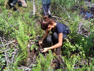 volunteer reforesting work