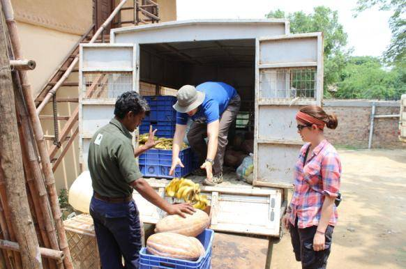 Volunteers loading food at India wildlife sanctuary