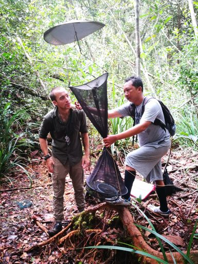 Volunteer butterfly survey in Borneo