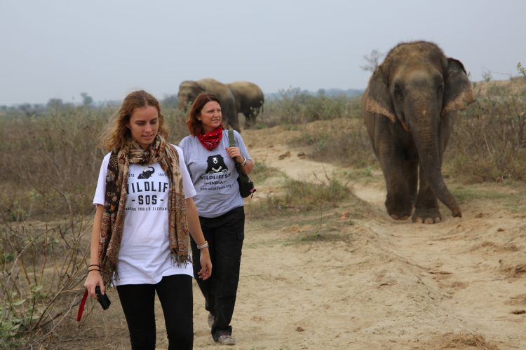 Volunteers walking with elephants in India