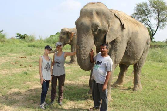 Volunteers with elephant in India