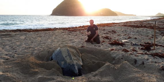 Volunteer with sea turtle in Grenada
