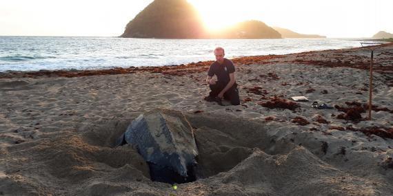 Volunteer with sea turtle in Grenada