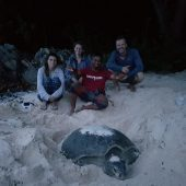 Sea Turtle and Coral Conservation in Malaysia