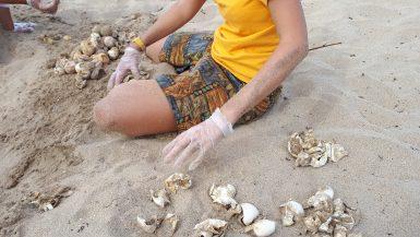 Volunteer with sea turtle eggs in Grenada on beach