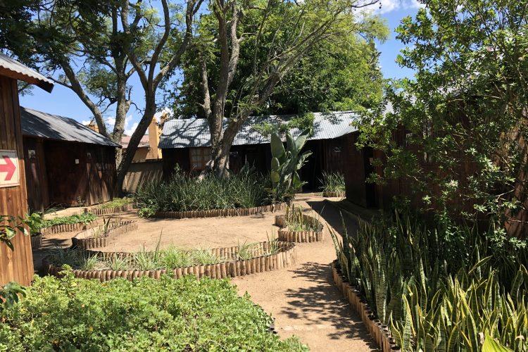 Chimpanzee sanctuary in South Africa