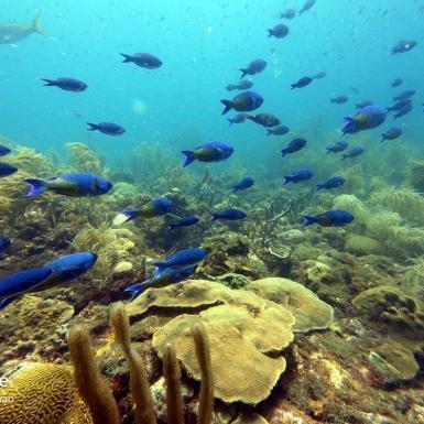 Fish swimming in coral in Grenada
