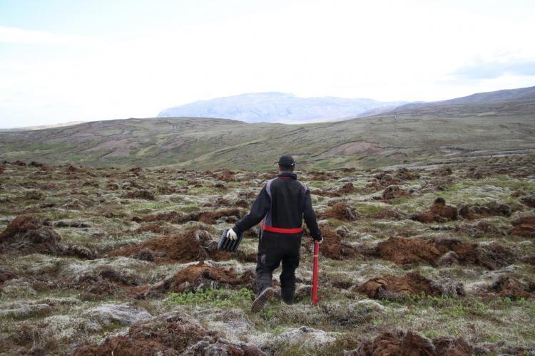 Volunteers planting trees in Iceland