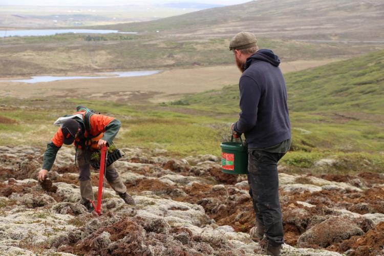 Volunteers doing reforestation in Iceland
