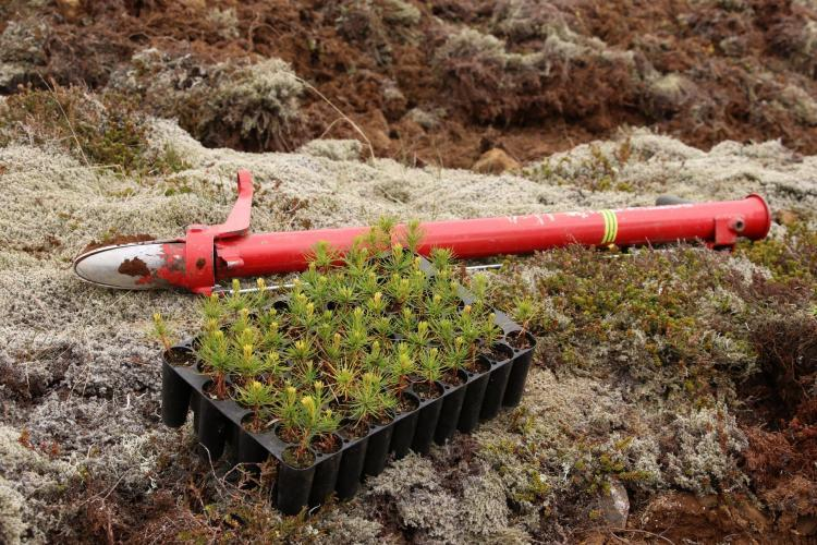 Tree saplings and tools to plant trees