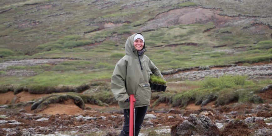 Volunteer planting saplings in Iceland